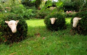 Quirky Sheep at Mount Brandon Self Catering Cottages Ireland