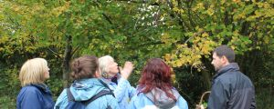 foraging_look_at_trees